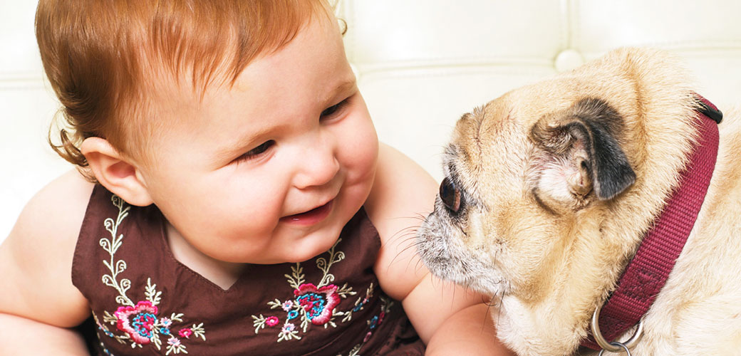 dog-care_common-dog-behavior-problems_dogs-and-babies_main-image_0 Турахыг хүсвэл нохой тэжээгээрэй