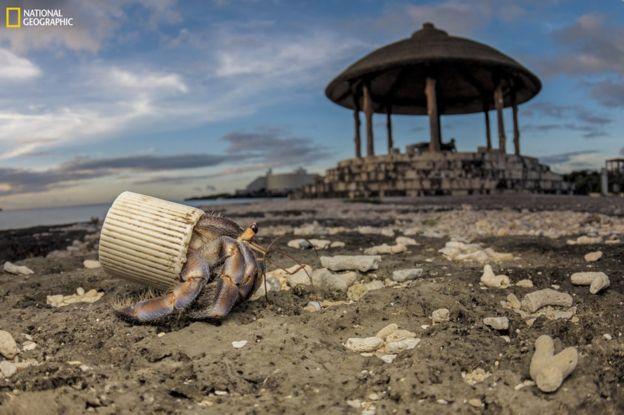 101680269_ngm_0618_plastics_009b National Geographic: Хуванцар хог хаягдлын уршигаар далай тэнгис сүйрч байна