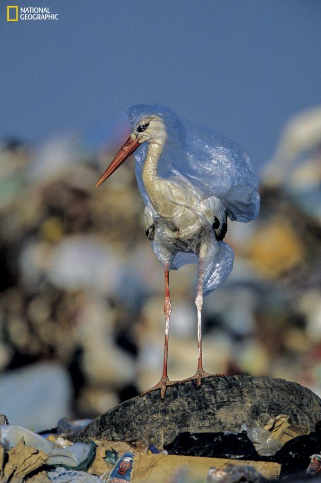 101680273_ngm_0618_plastics_008 National Geographic: Хуванцар хог хаягдлын уршигаар далай тэнгис сүйрч байна