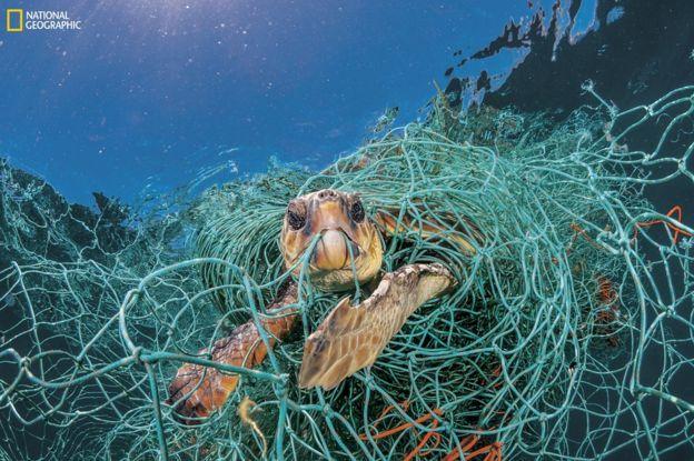 101683652_ngm_0618_plastics_007 National Geographic: Хуванцар хог хаягдлын уршигаар далай тэнгис сүйрч байна