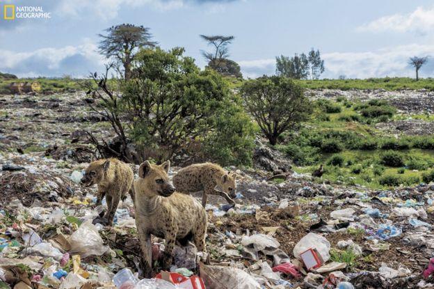 101734590_ngm_0618_plastics_009 National Geographic: Хуванцар хог хаягдлын уршигаар далай тэнгис сүйрч байна