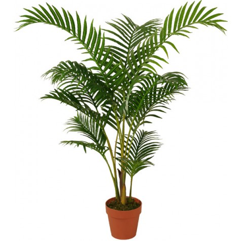 areca-palm Тасалгааны агаар цэвэршүүлэх гурван ургамал