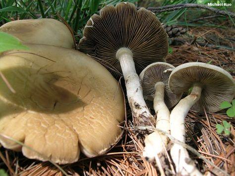 toxic-mushrooms-in-iran-kill-11-people-and-poison-more-than-800 Хортой мөөгөнд 11 хүн амиа алдаж, 800 орчим хүн эмнэлэгт хүргэгджээ