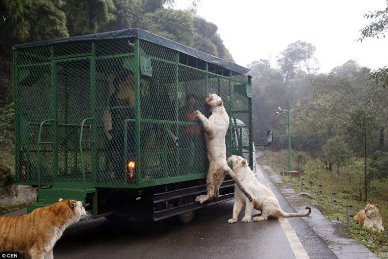 2-115154-269597069 Хүмүүс өөрсдөө ҮЗВЭР БОЛДОГ амьтны хүрээлэн
