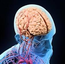 images-2 Хүний тархийг шилжүүлэн суулгахад нэг алхам ойртлоо