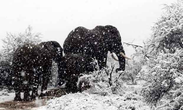 10003 Өмнөд Африкт цас орж, амьтдад шинэ мэдрэмж төрүүлэв