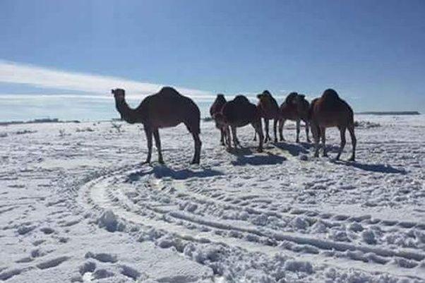 main-qimg-45bdf69f569efc164af0ba3768f12b33-c Өмнөд Африкт цас орж, амьтдад шинэ мэдрэмж төрүүлэв