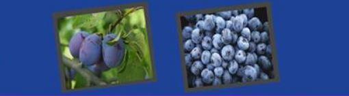 6-1 Тод өнгийн жимс, хүнсний ногооны ач тус
