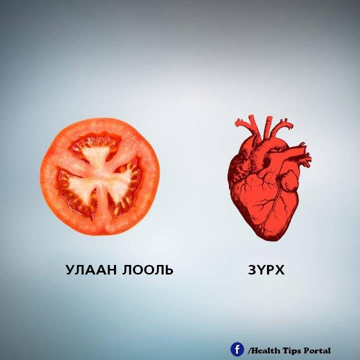 e2 Хүний биеийн эрхтэнтэй ижил хэлбэртэй жимс, ногоо тухайн эрхтэнд эерэгээр нөлөөлдөг