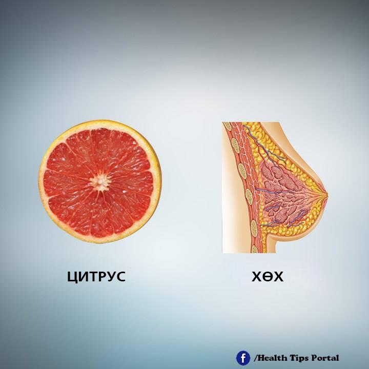 e6 Хүний биеийн эрхтэнтэй ижил хэлбэртэй жимс, ногоо тухайн эрхтэнд эерэгээр нөлөөлдөг