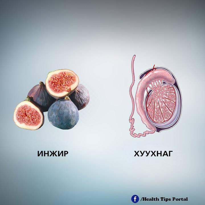 e7 Хүний биеийн эрхтэнтэй ижил хэлбэртэй жимс, ногоо тухайн эрхтэнд эерэгээр нөлөөлдөг