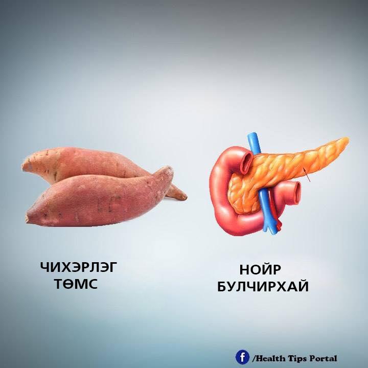 e8 Хүний биеийн эрхтэнтэй ижил хэлбэртэй жимс, ногоо тухайн эрхтэнд эерэгээр нөлөөлдөг