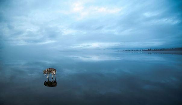 """nohi3 Фото: Ноход усны мандал дээгүүр """"алхжээ"""""""