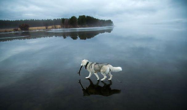 """ppp Фото: Ноход усны мандал дээгүүр """"алхжээ"""""""