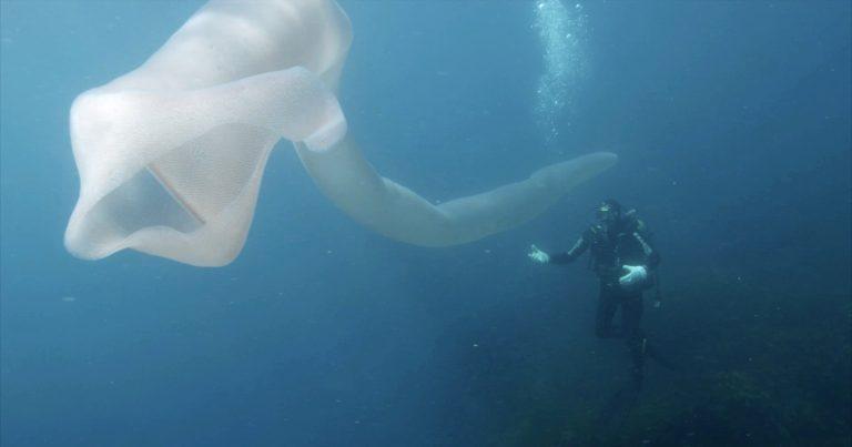 0_AdobeBridgeBatchRenameTemp1CATERS_DEEP_SEA_WORM__01-768x403 Шинэ Зеландад далайн аварга амьд биеттэй таарчээ