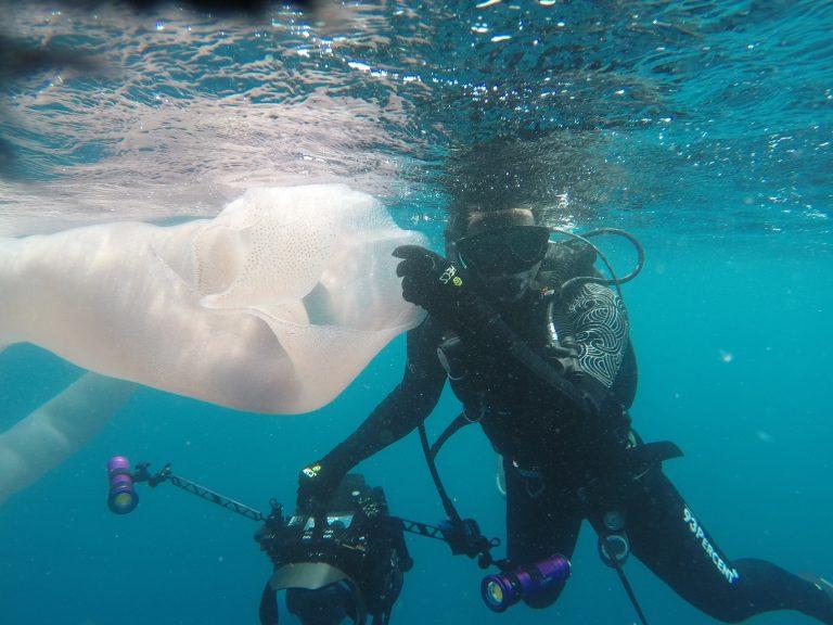 1_AdobeBridgeBatchRenameTemp2CATERS_DEEP_SEA_WORM__02-768x576 Шинэ Зеландад далайн аварга амьд биеттэй таарчээ