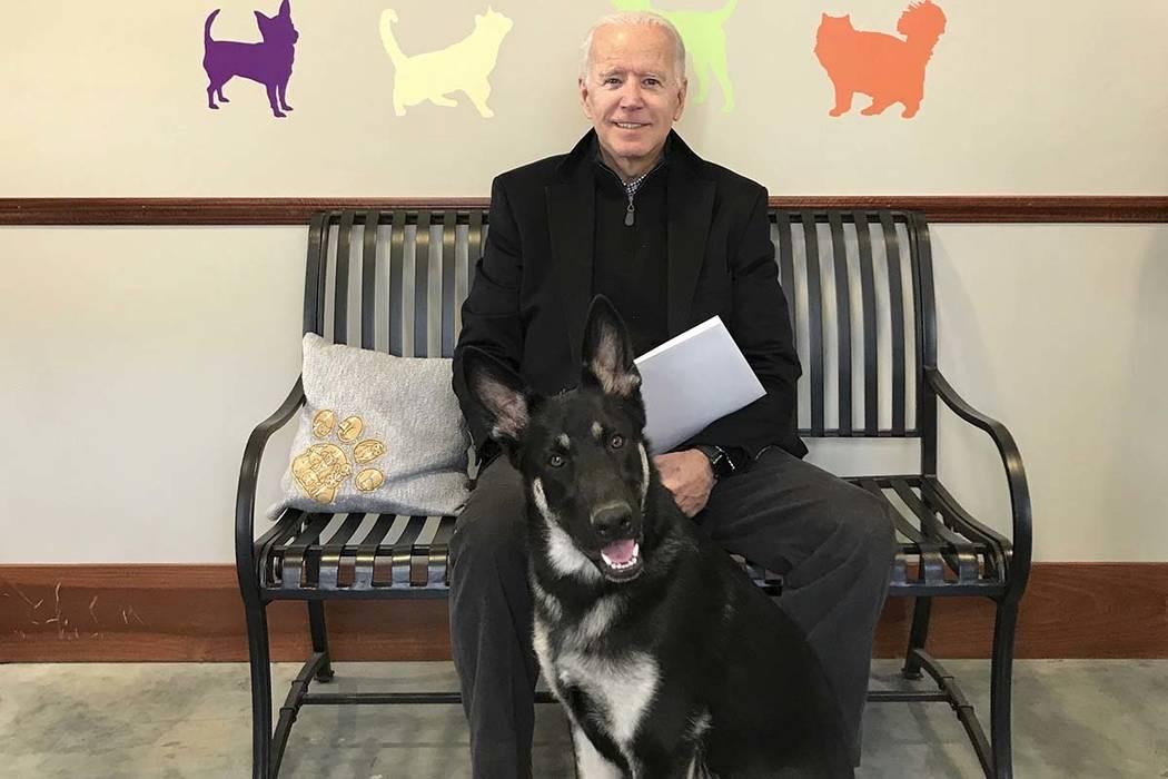11418520_web1_Joe-Biden-dog 2018 онд улс төрд болсон сэтгэл хөдөлгөм таван мөч