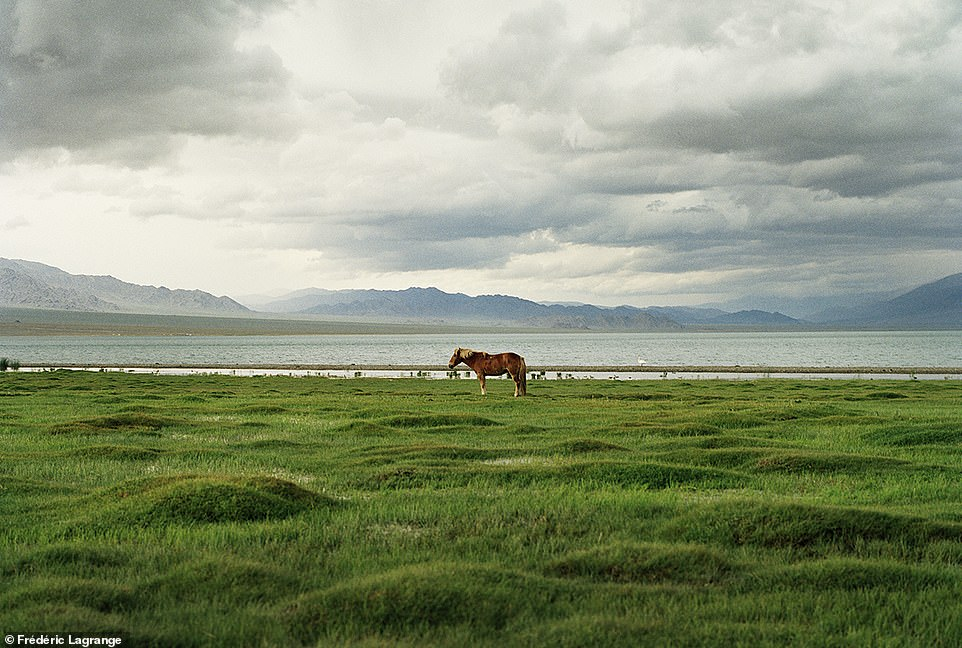 6644372-6429135-A_horse_stands_on_the_shores_of_Uureg_Nuur_Lake_in_western_Mongo-a-76_1544201485364 Фото: Английн гэрэл зурагчны дуранд Монгол улс