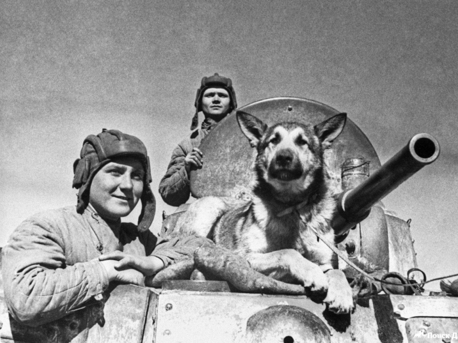 1-14 Дэлхийн II дайнд оролцсон амьтад