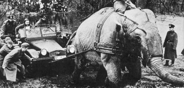2-12 Дэлхийн II дайнд оролцсон амьтад