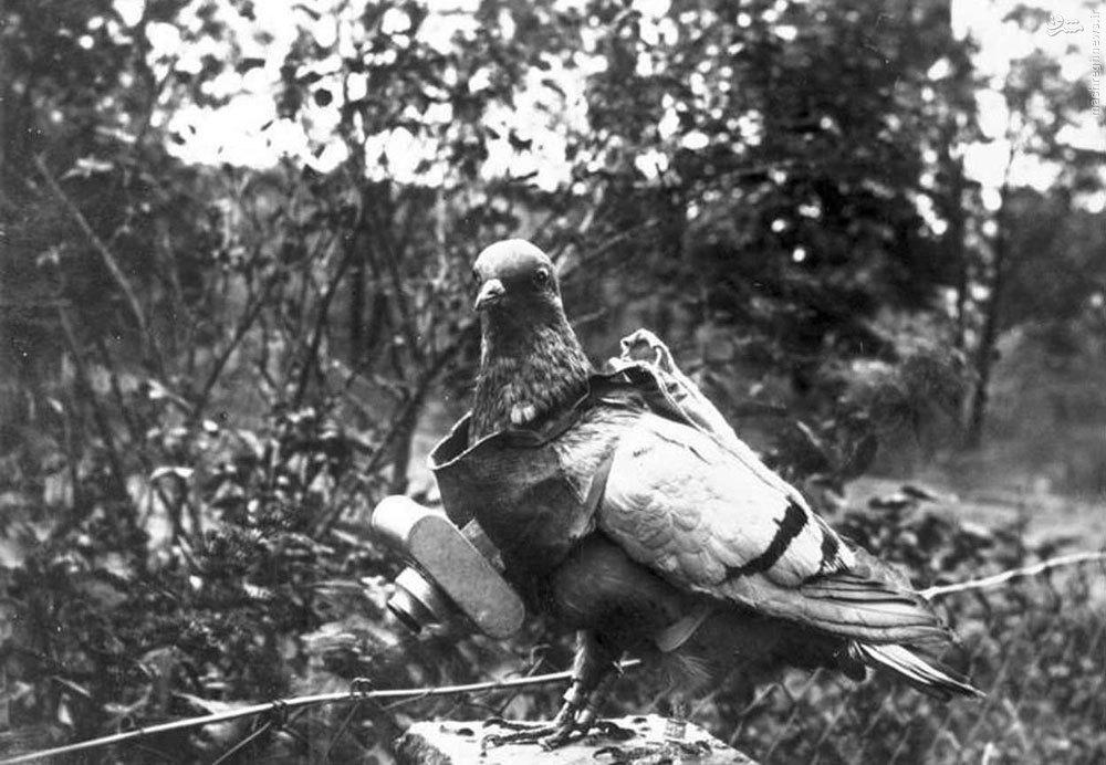 3-14 Дэлхийн II дайнд оролцсон амьтад