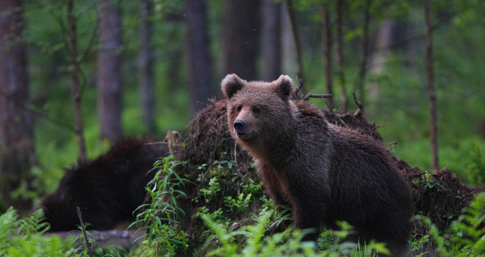4-9 Сүүлийн 40 жилд дэлхийн зэрлэг байгалийн 60 хувь нь устжээ