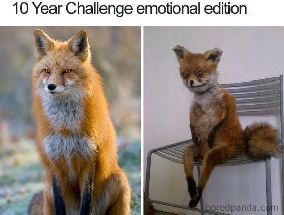 """9-6 """"10 Year Challenge""""-ийг элэглэсэн зургууд"""