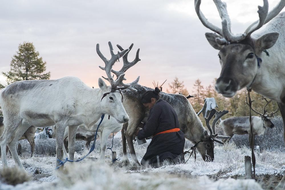 05-3 Монголын мөхөж буй цаатнуудын амьдрал