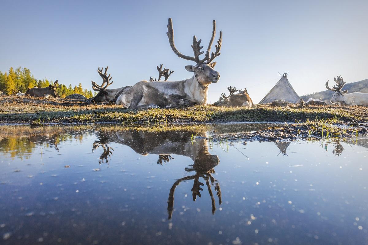 07 Монголын мөхөж буй цаатнуудын амьдрал