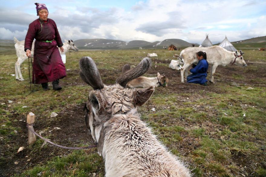 10-5 Монголын мөхөж буй цаатнуудын амьдрал
