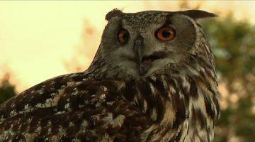 eagle-owl-360x200 Нүүр