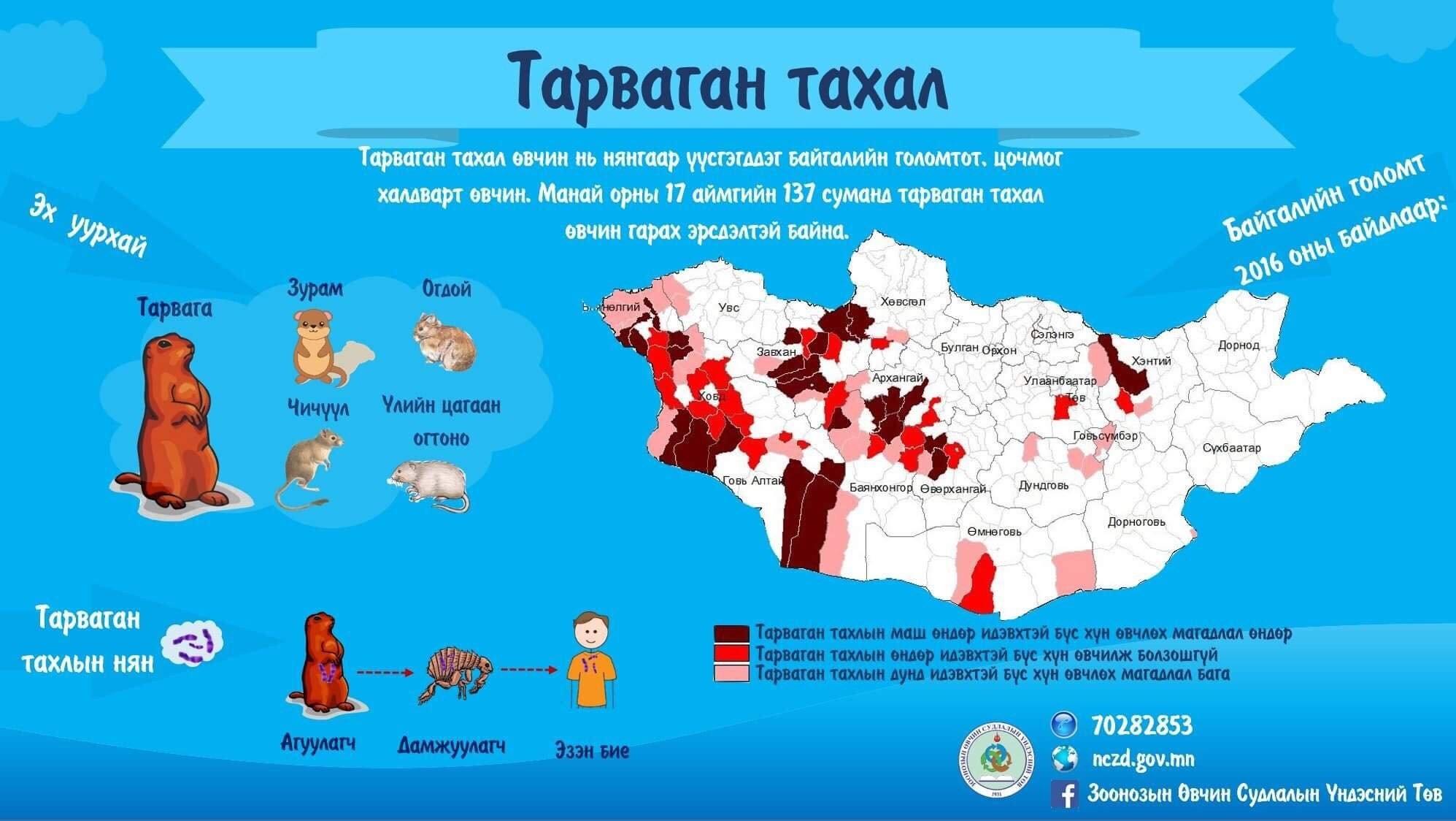 03052019-1556842972-335341732-4 Тарваган тахлын халдвараас сэргийлээрэй