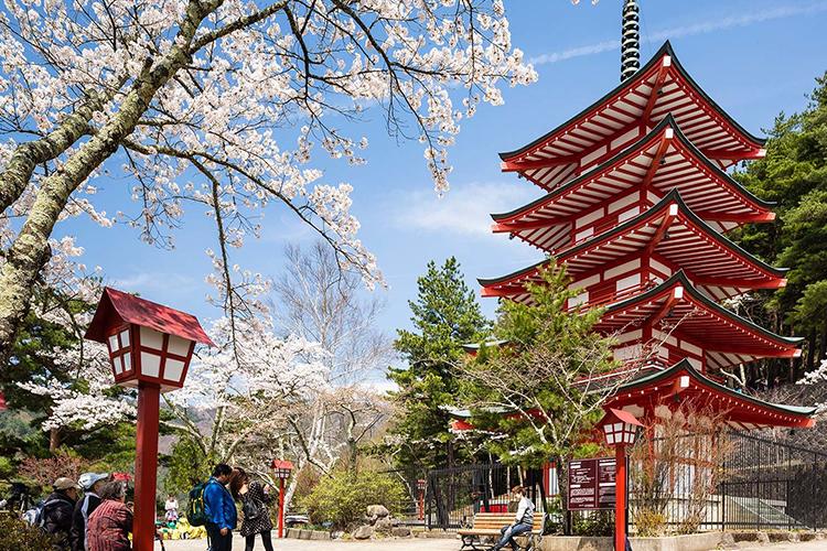 Японд амьдрахын тулд юунд дасан зохицох ёстой вэ?