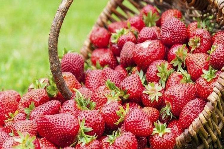 guzeelzgene4 Гүзээлзгэнэ жимс дархлаа сайжруулдаг